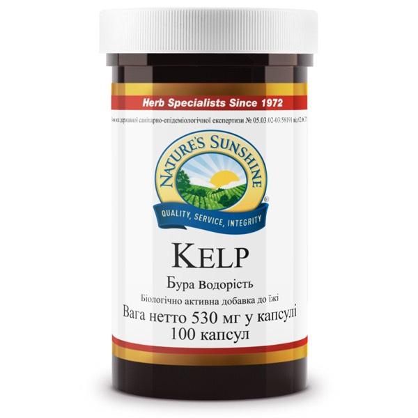 Бурая водоросль (Келп) | Kelp, фото 1