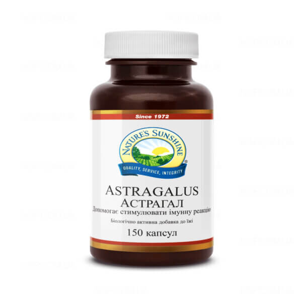 Астрагал | Astragalus, фото 1